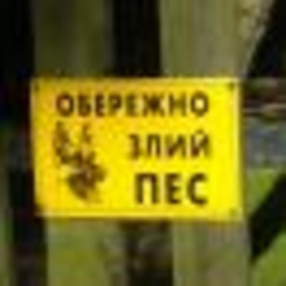 Украинский пёс - Новости Калининграда