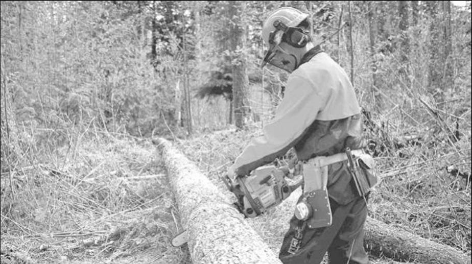 Незаконная рубка деревьев обойдется жителю Нестеровского района в 53 тыс- рублей - Новости Калининграда