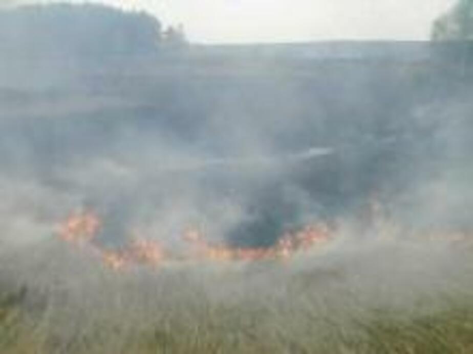 Поджог травы едва не прив-л к возгоранию домов - Новости Калининграда