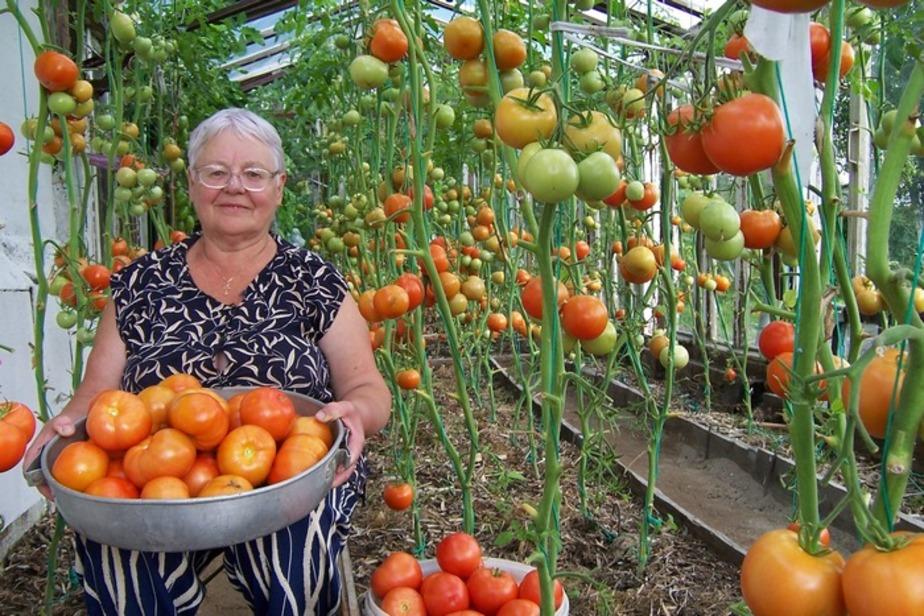 Читатели собрали урожай призов - Новости Калининграда