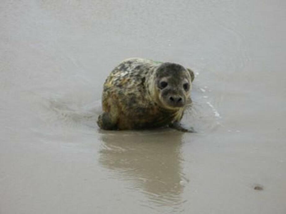 Неизвестные подбросили к калининградской ветклинике детеныша Балтийского тюленя - Новости Калининграда