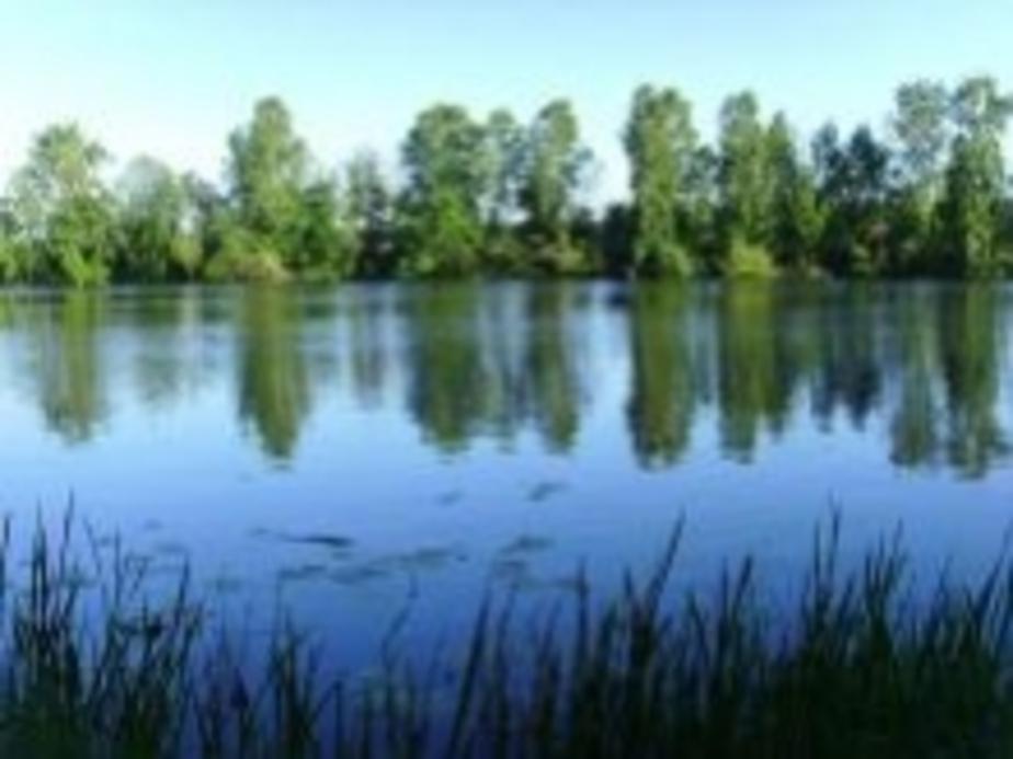 В озере Правдинска утонул 10-летний мальчик - Новости Калининграда
