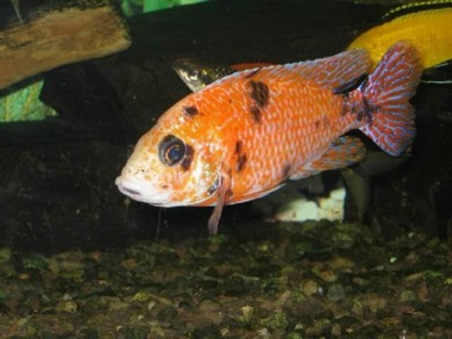 В Калининграде выберут лучшую аквариумную рыбку - Новости Калининграда