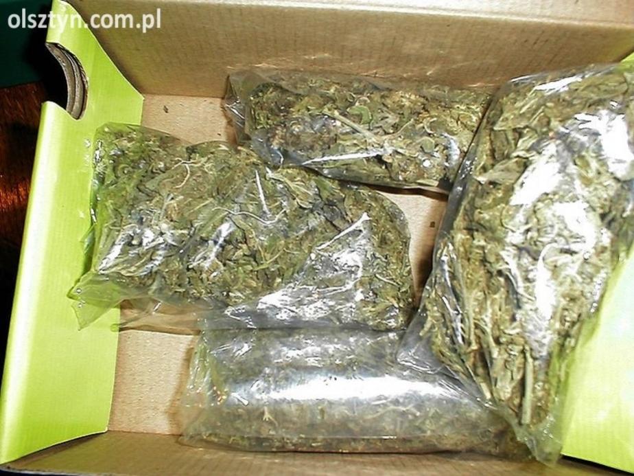 """У криминального дуэта -""""ботаников-"""" изъяли 9 кг марихуаны - Новости Калининграда"""