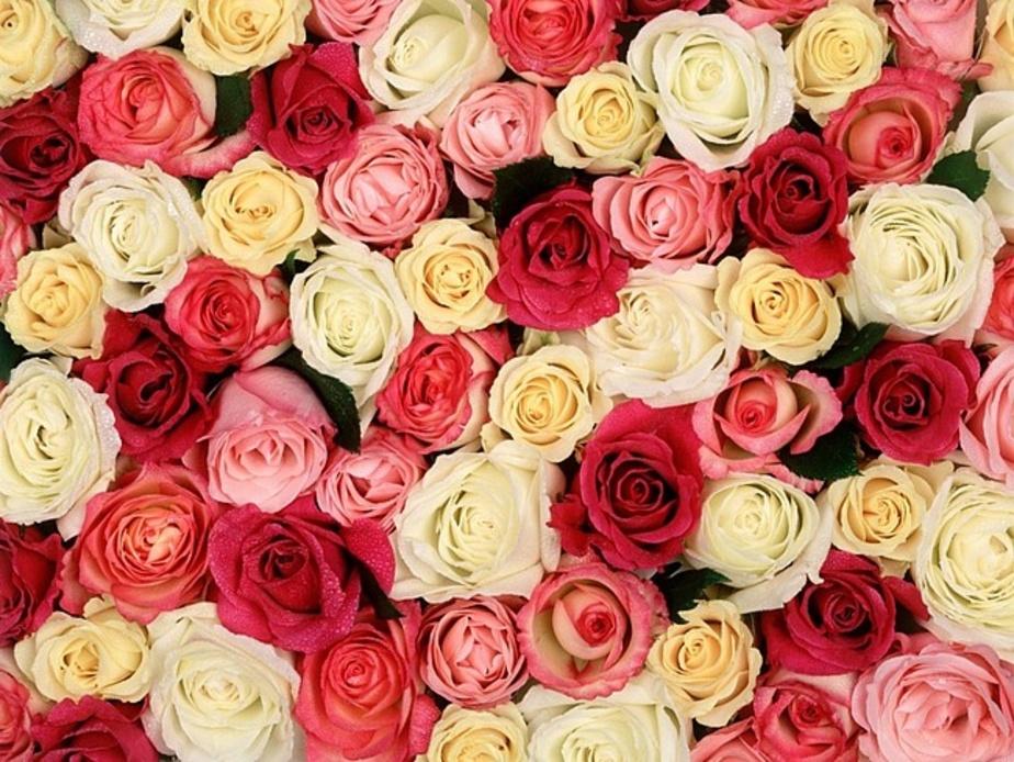 Афиша на выходные в Калининграде- -Елена-- бесплатная ярмарка и 300 роз в подарок мамам - Новости Калининграда