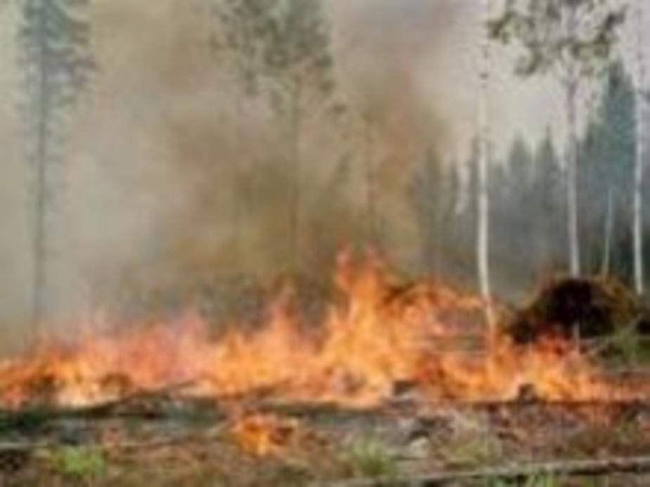 Из-за пожара травы загорелся газетный киоск - Новости Калининграда