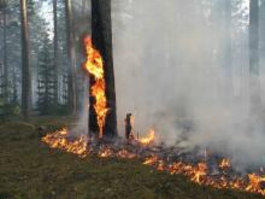 В области зафиксирован первый лесной пожар - Новости Калининграда