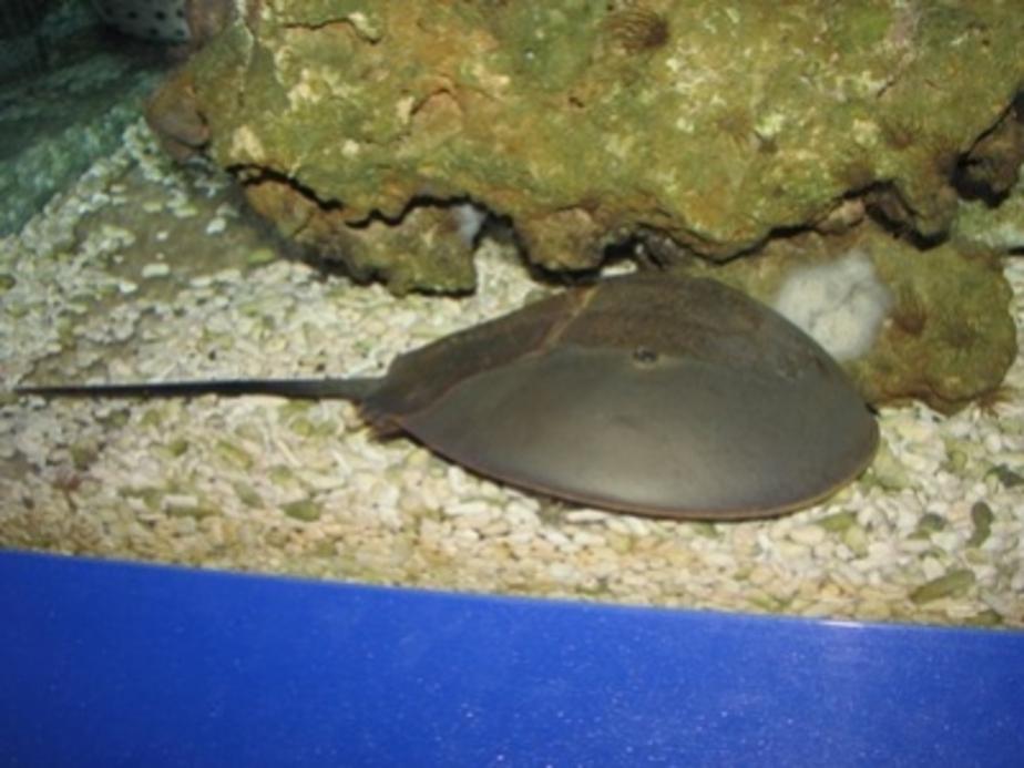 В аквариуме Музея Мирового океана появился современник динозавров - Новости Калининграда
