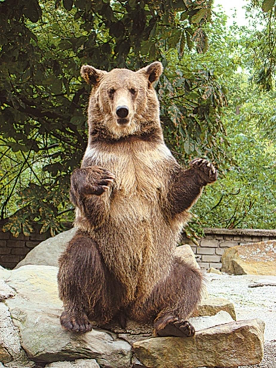 Любимым животным калининградцев стал медведь Фима - Новости Калининграда