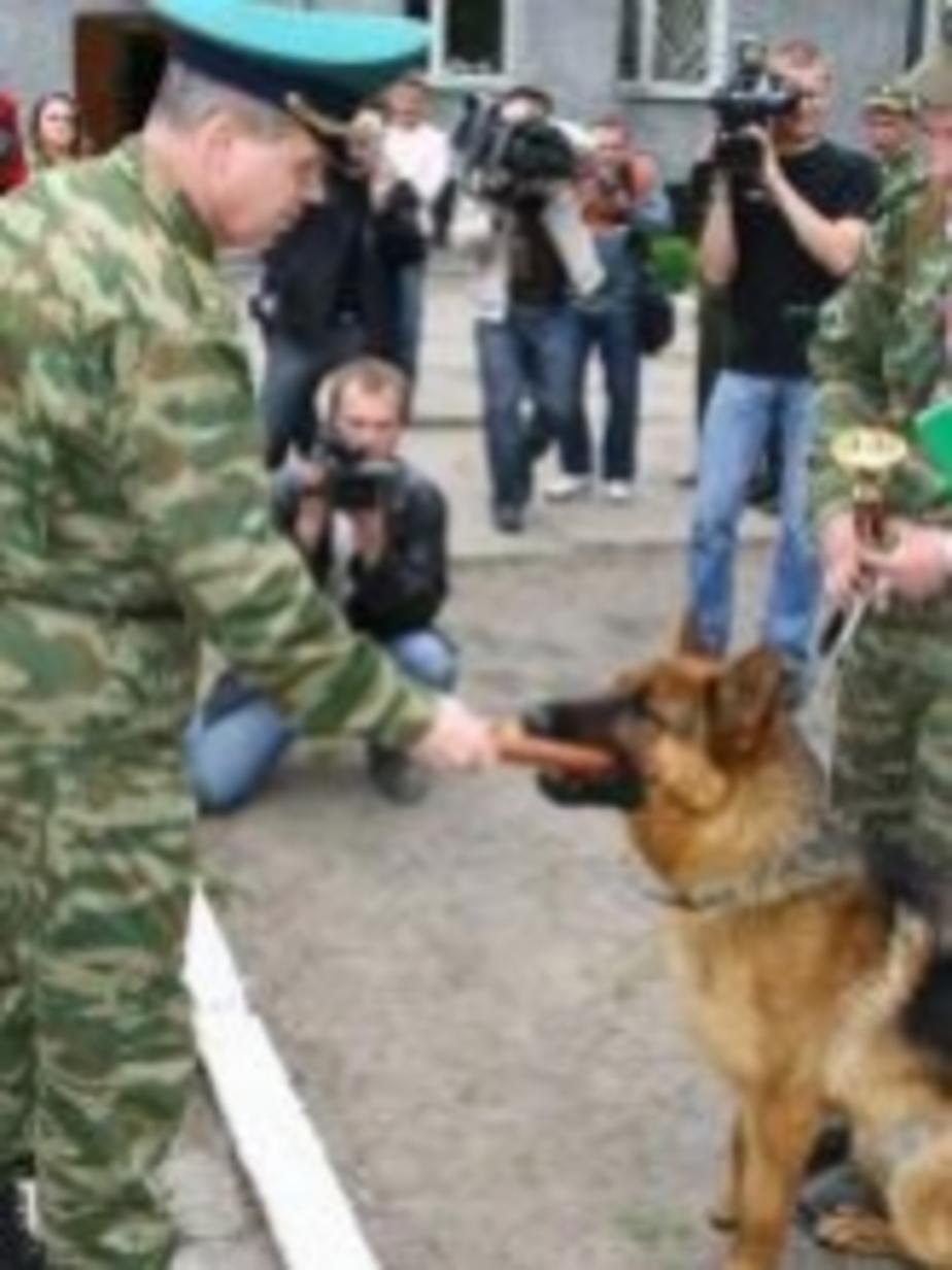 Лучшим пограничным псом стала овчарка Алана Балт Жан Карло - Новости Калининграда