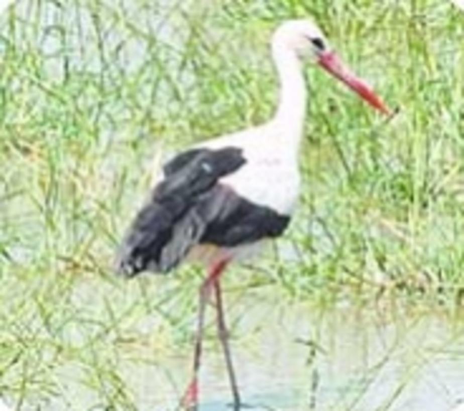 Окно в природу: Птицы перепутали время года - Новости Калининграда