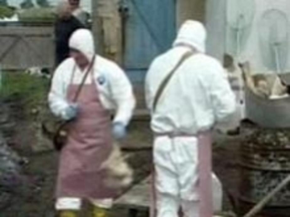 В Калининграде подготовлен отряд 20 специалистов - -гриппоборцев- - Новости Калининграда