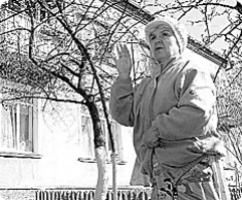 Хозяева приютили убийцу - Новости Калининграда