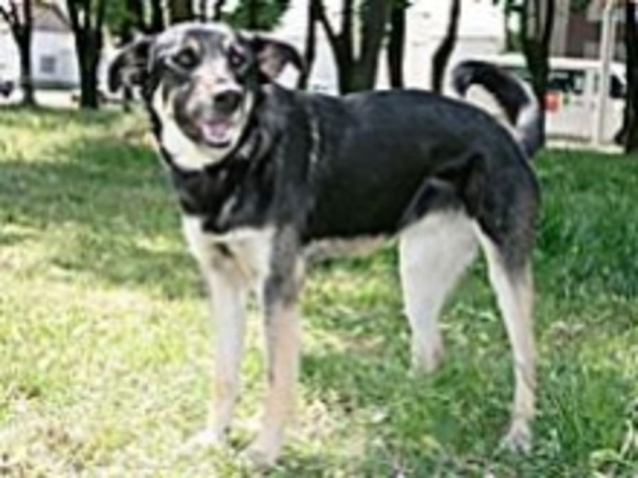 Собака плакала от боли - Новости Калининграда