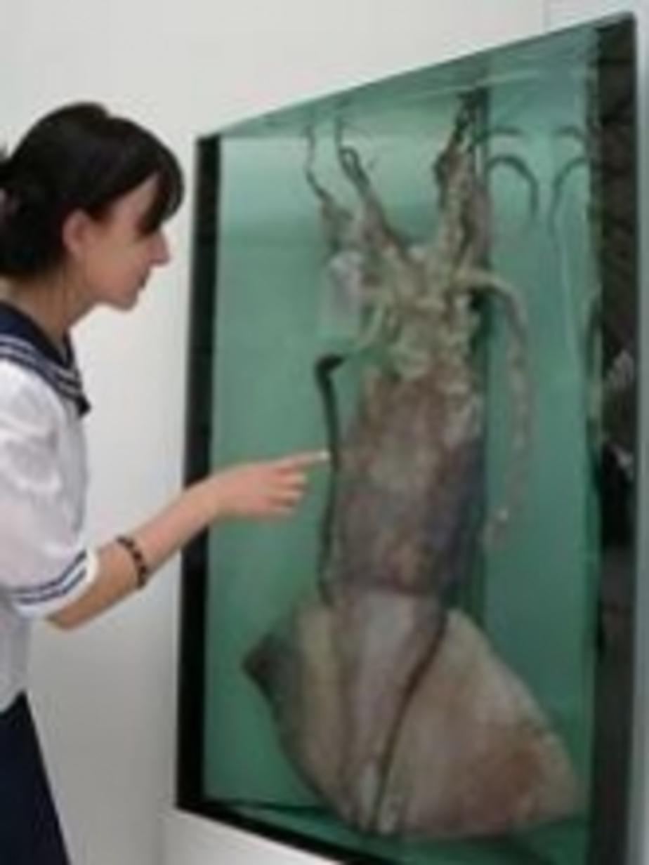 В Калининграде разморозили гигантского кальмара - Новости Калининграда