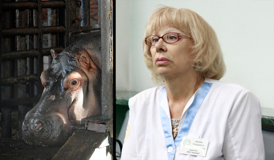 Ярошук уволил директора зоопарка Аноку - Новости Калининграда