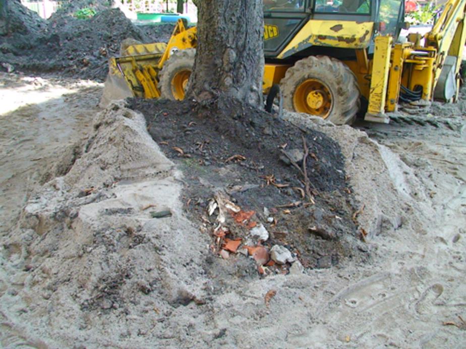 Во дворе дома на ул. Комсомольской обрубили корни вековых деревьев - Новости Калининграда
