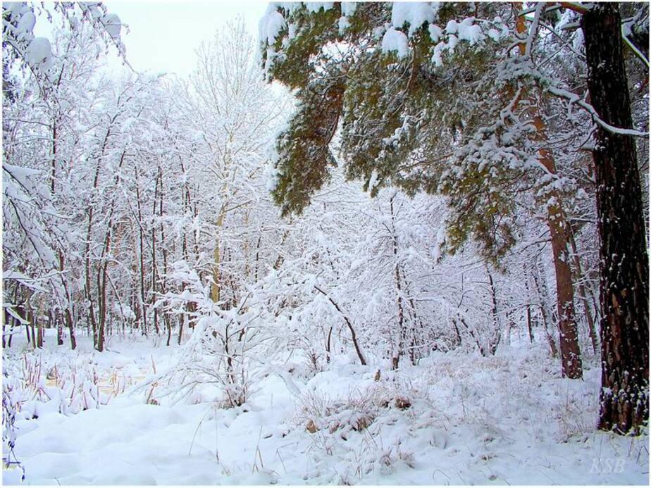 Пьяный калининградец замерз насмерть в лесу - Новости Калининграда