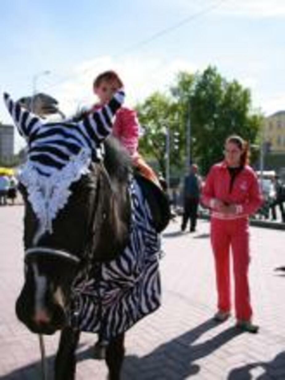 Лошадь прогуливалась по Калининграду в костюме зебры - Новости Калининграда