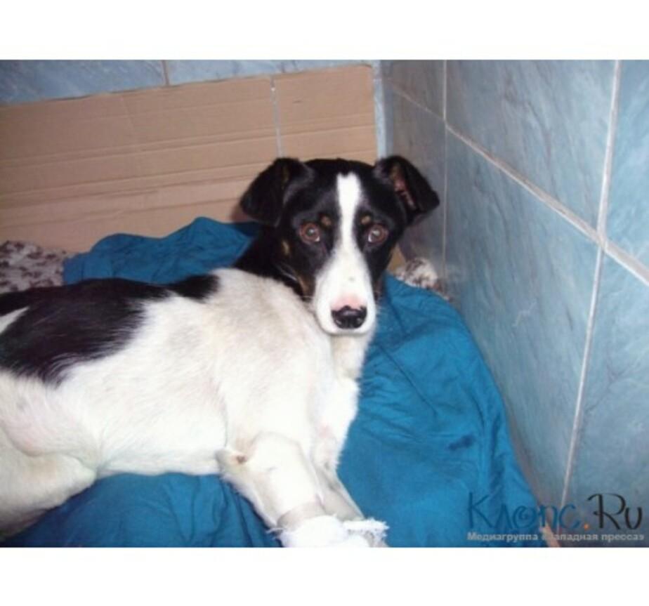 Бездомная собачка-инвалид- передвигающаяся на тележке- нашла хозяев - Новости Калининграда