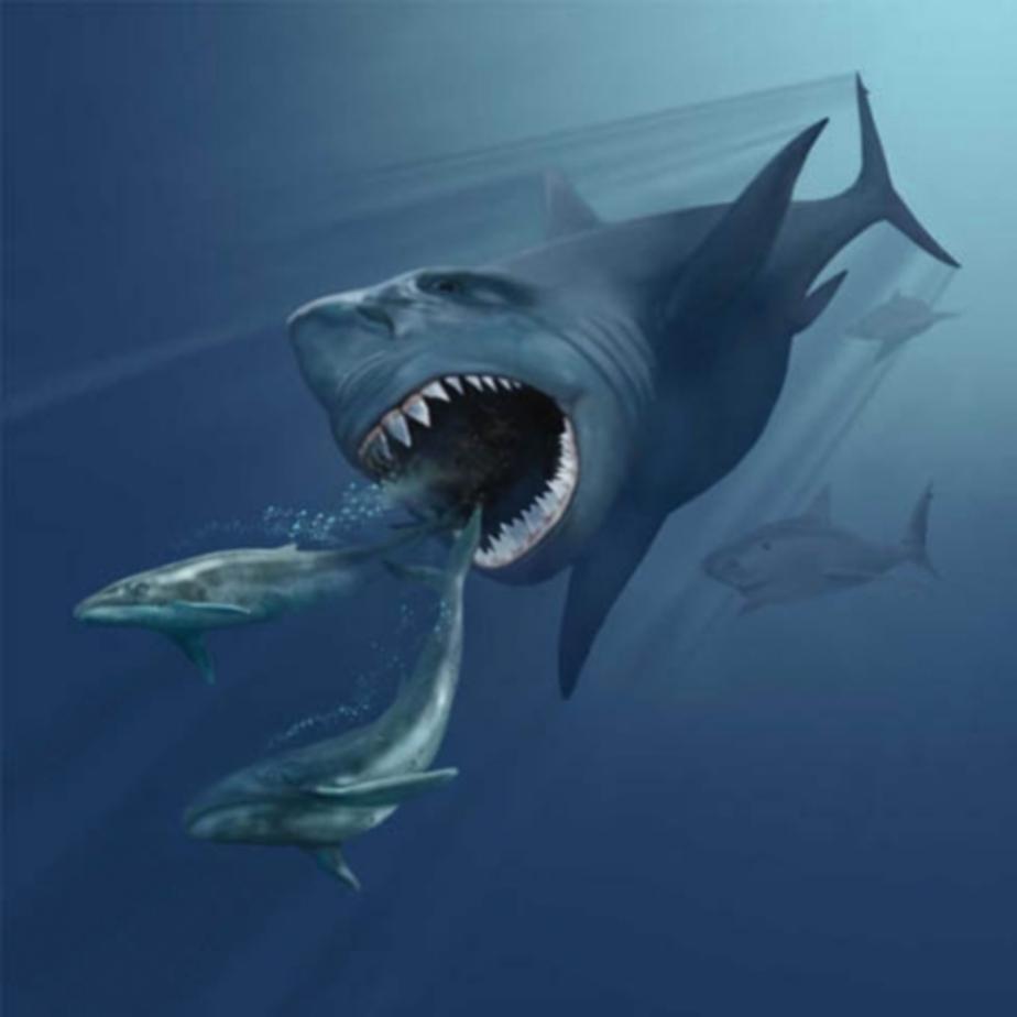 Калининградцам покажут зуб вымершей 2 млн лет назад акулы - Новости Калининграда