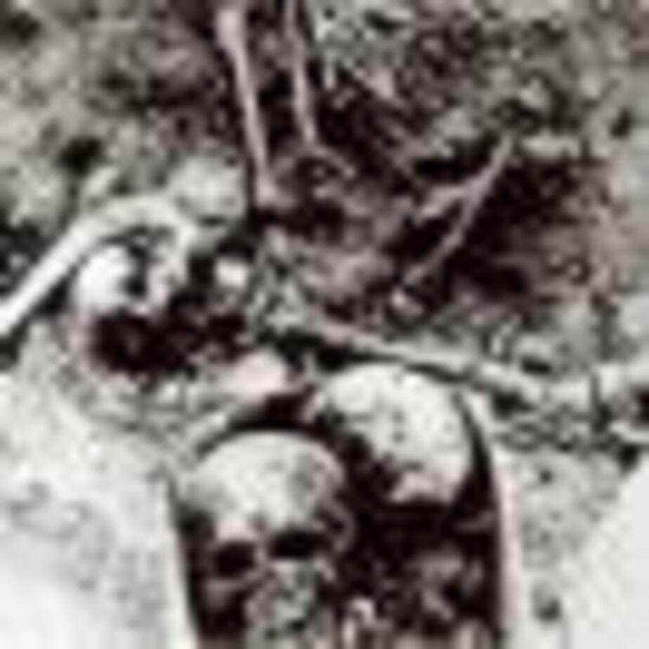 Братская могила стала стройкой - Новости Калининграда