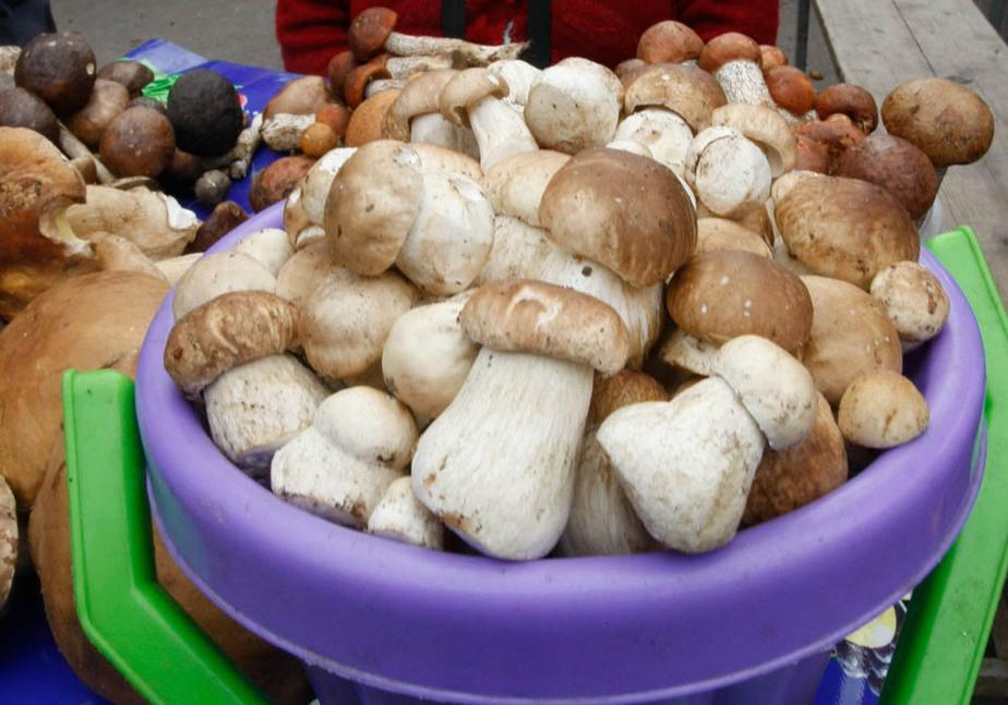 Три семьи в Калининграде отравились грибами - Новости Калининграда
