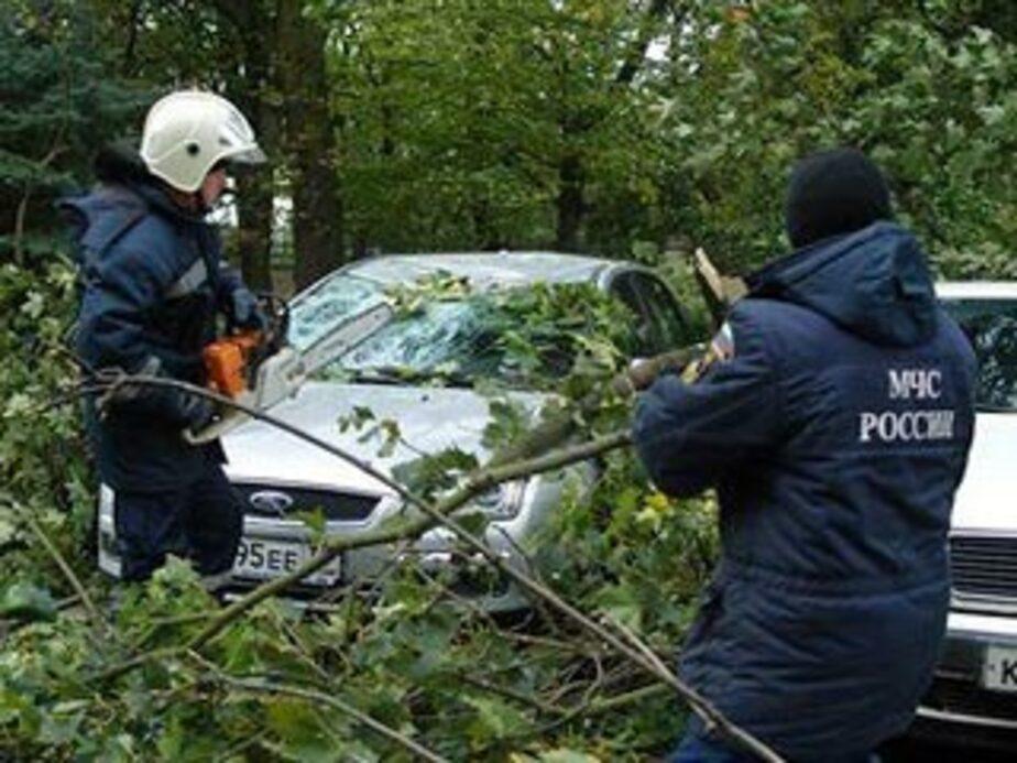 На выходных в Калининграде ожидается сильный ветер - Новости Калининграда