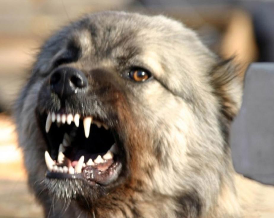 Мать покусанного бродячей собакой ребенка взыскала с ЖЭКа 90 тыс- руб-