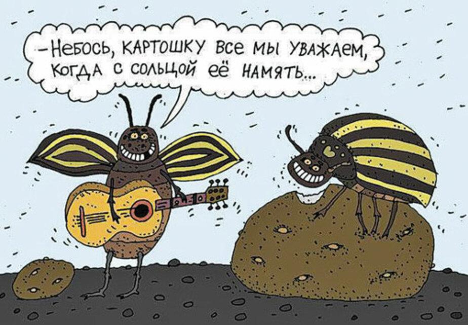 Прикольные картинки про жука, про