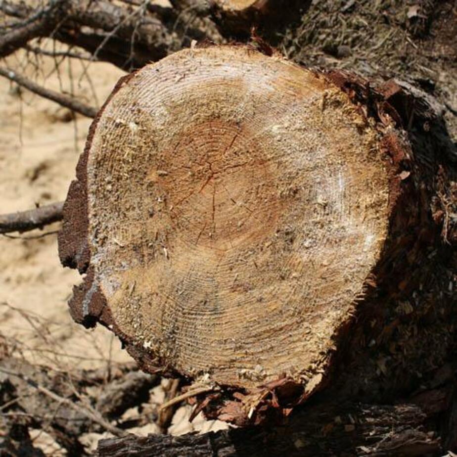 В районе строительства школы в Гусеве незаконно вырубили деревья на 7-8 млн- руб- - Новости Калининграда