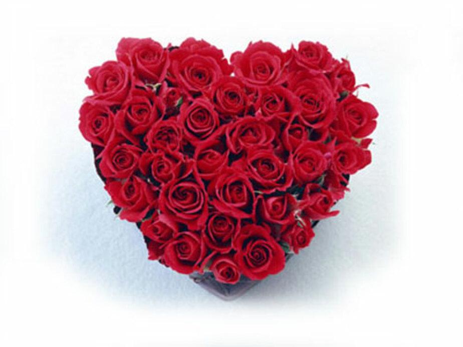 Как ты готовишься к Дню влюбленных? - Новости Калининграда
