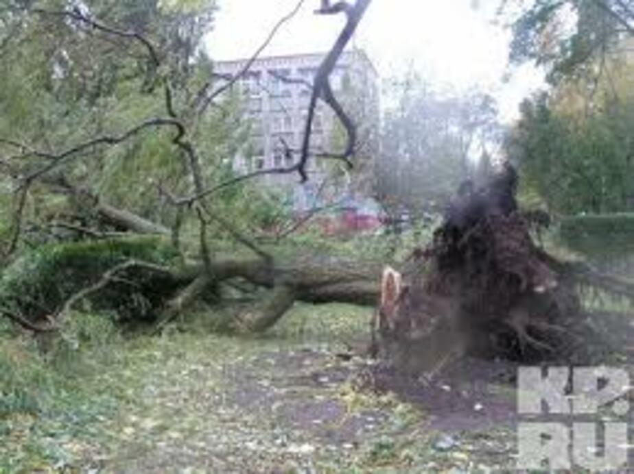 Власти Краснознаменска до сих пор не ликвидировали последствия летнего урагана - Новости Калининграда
