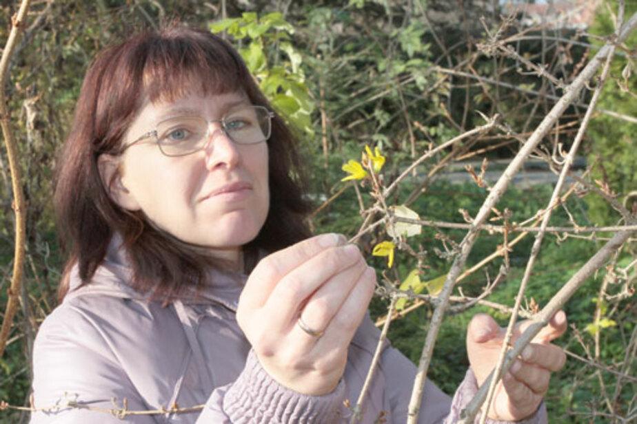 Из-за тепла растения выпустили бутоны - Новости Калининграда