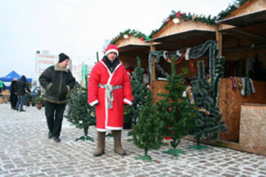На следующей неделе в Калининграде открываются елочные базары -СПИСОК МЕСТ- - Новости Калининграда