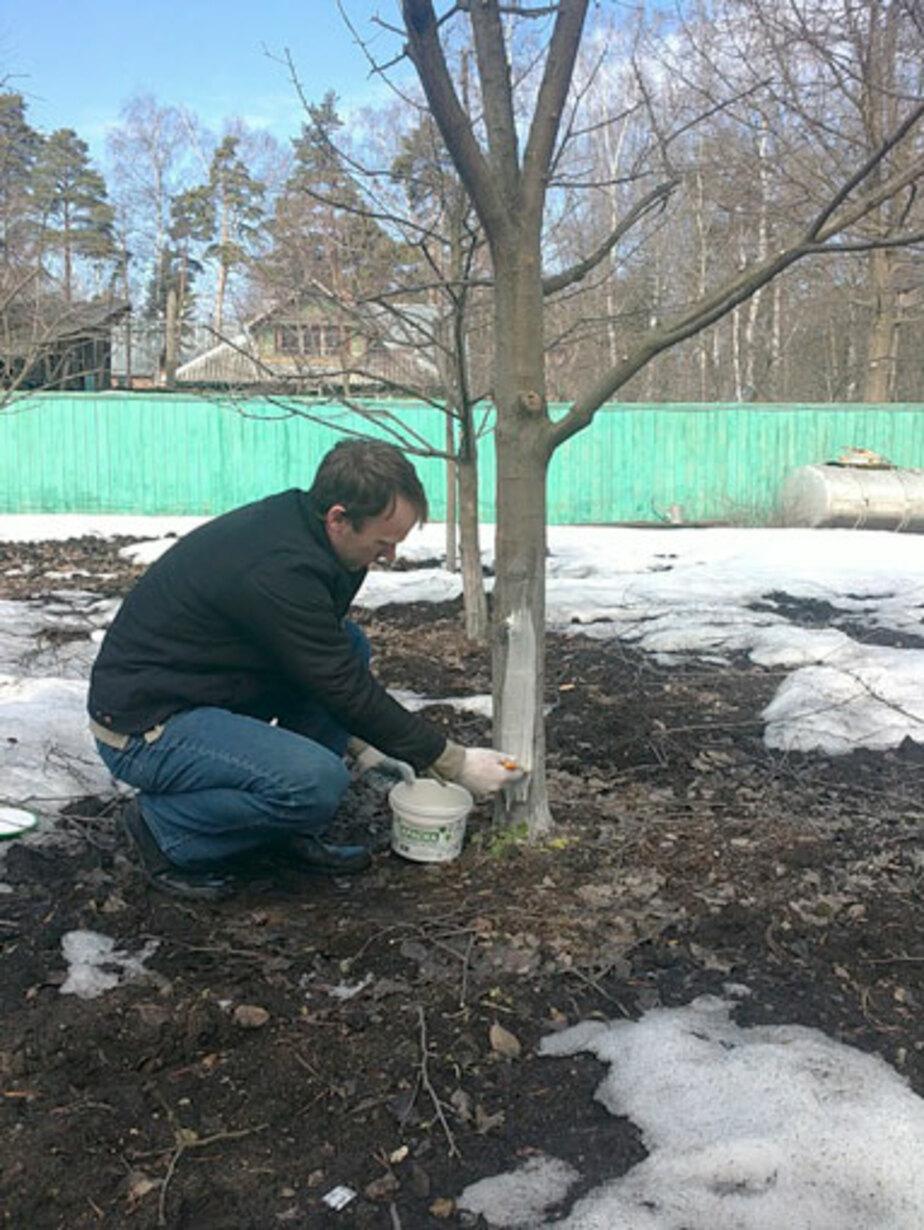 Чем заняться садоводу во время затянувшейся зимы - Новости Калининграда