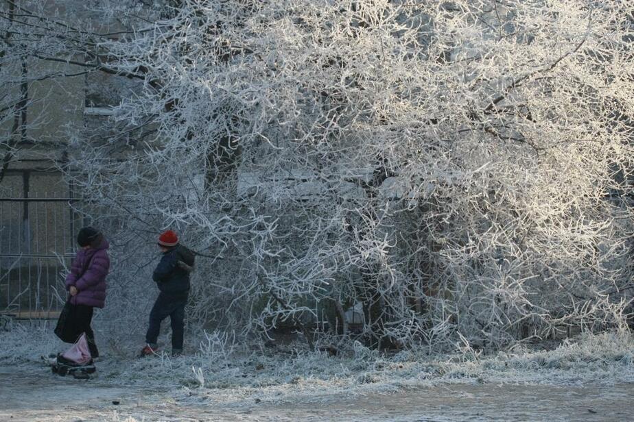 К концу недели в Калининграде ожидается мороз до -15 - Новости Калининграда