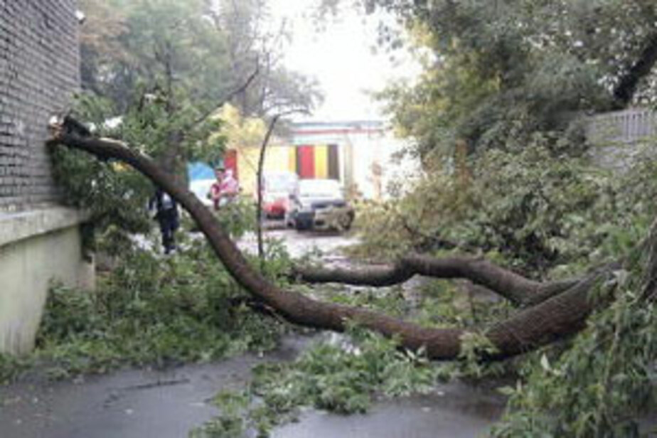 Ураган нанес Калининградской области ущерб на 50 млн- рублей