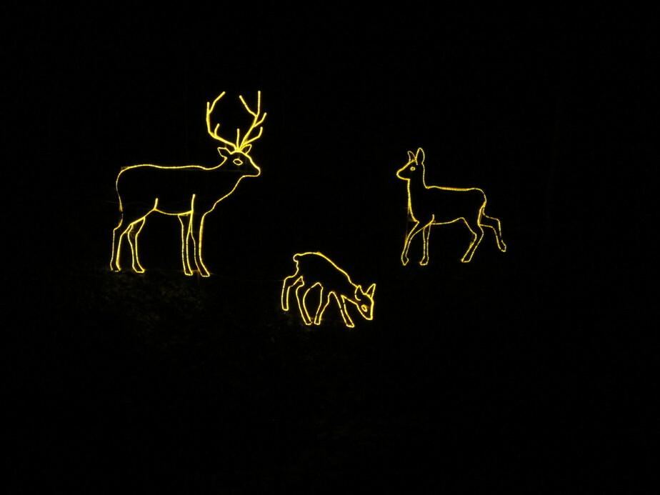 В зоопарке установили светящихся оленей - Новости Калининграда