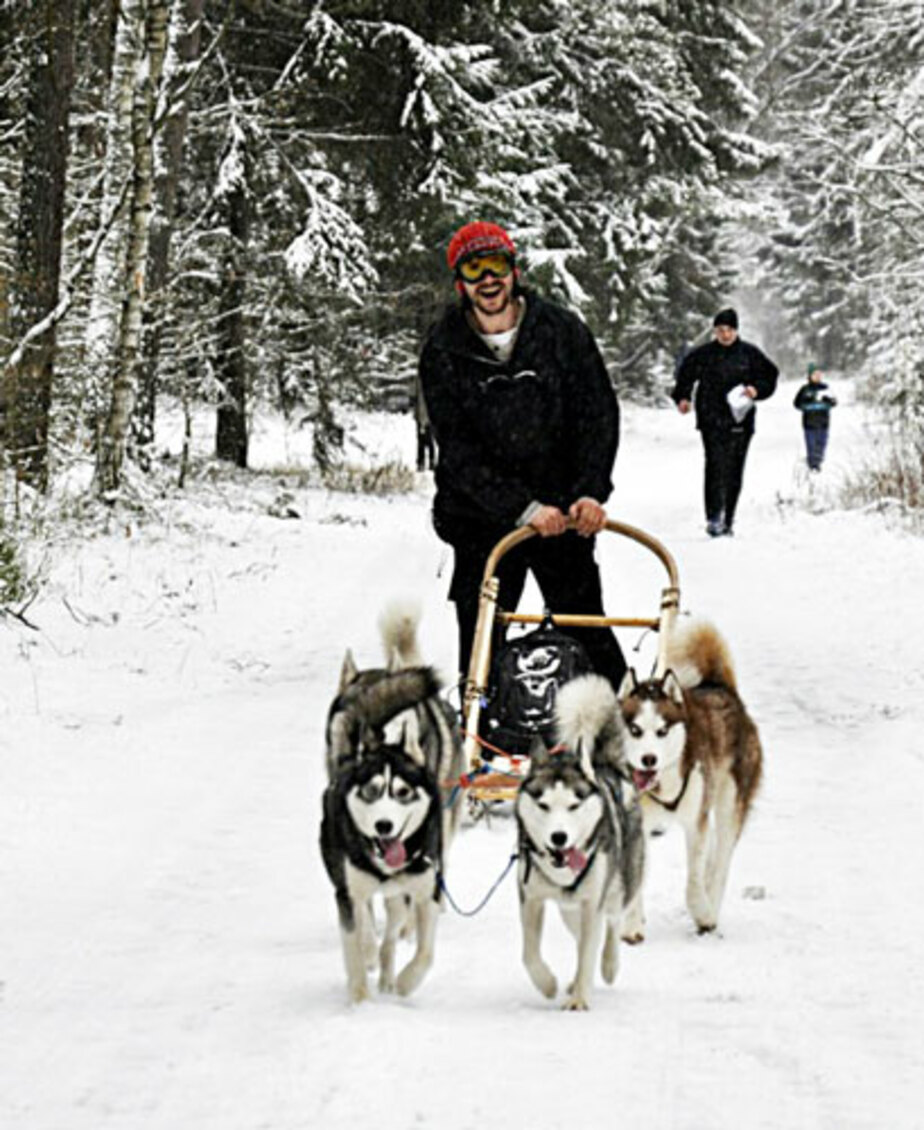 Выпал снег – запрягай сани и собаку не забудь!