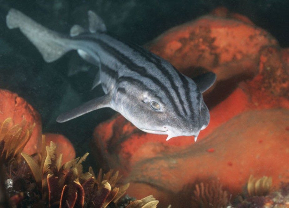 Акулы в Музее Мирового океана впервые дали потомство - Новости Калининграда