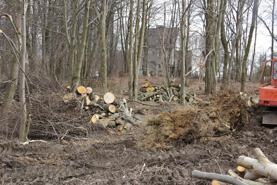 В Гурьевске пометили 250 деревьев