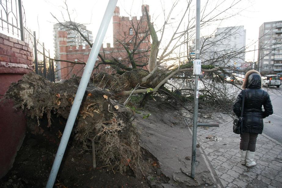 В Калининградской области объявлено штормовое предупреждение - Новости Калининграда