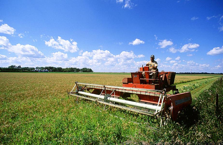 Региональные власти помогут начинающим фермерам грантами и субсидиями - Новости Калининграда