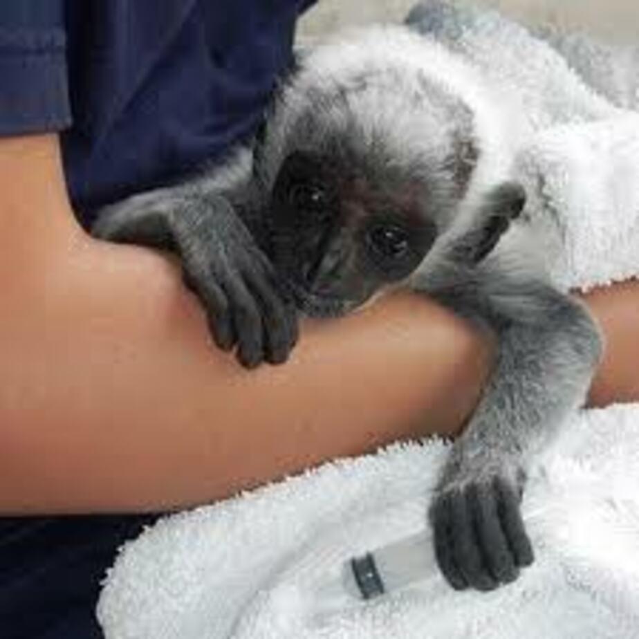 В зоопарке родились двое бурых медвежат и обезьянка колобус - Новости Калининграда