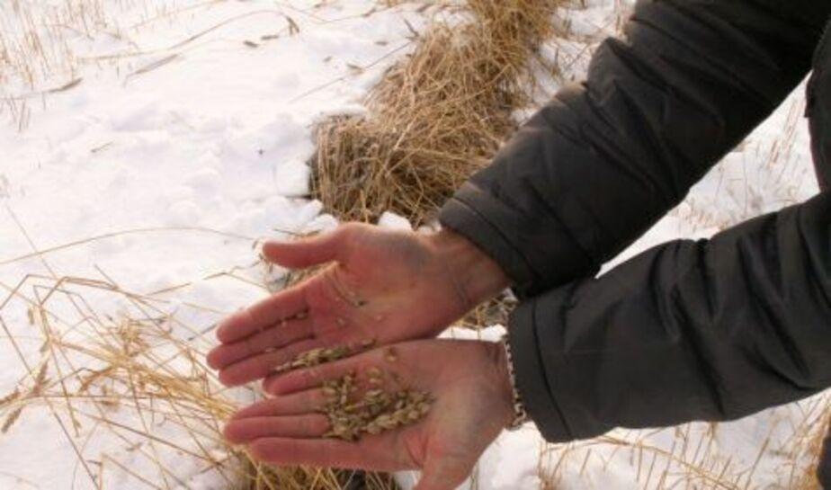 Министр- Год для сельского хозяйства начинается нехорошо - Новости Калининграда
