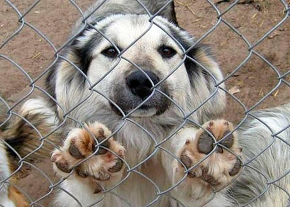 В Калининграде трем организациям выделили участки под приюты для животных