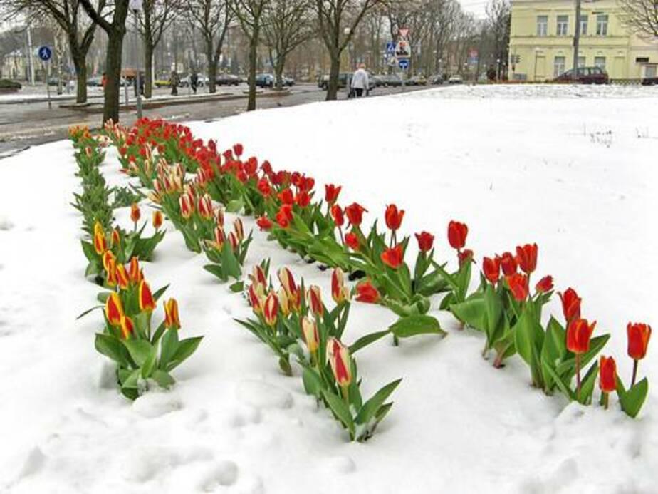 С 8 марта в Калининградской области резко похолодает - Новости Калининграда