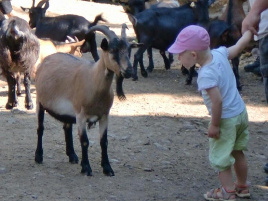 В Калининградском зоопарке дерево повредило вольер с козами