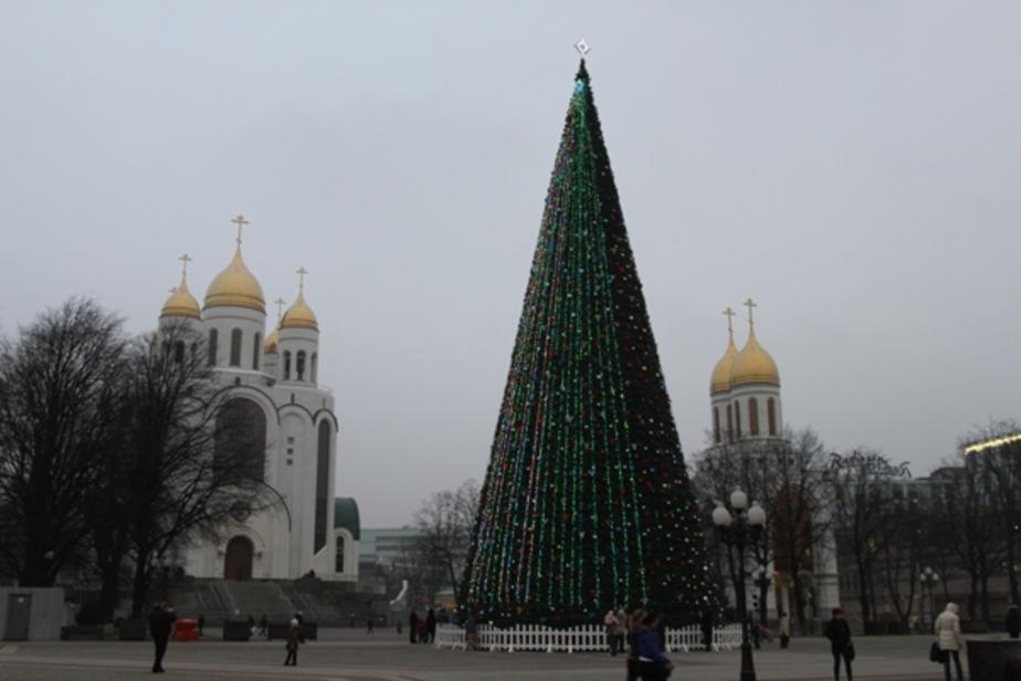 В Калининграде начался монтаж новогодней елки - Новости Калининграда